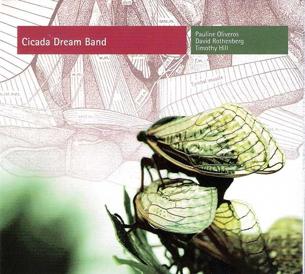 cd-cicada-dream-band.jpg