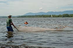 Chris Nack, a fellow with the National Estuarine Research Reserve seining in the Hudson River near Catskill on August 2, 2011.