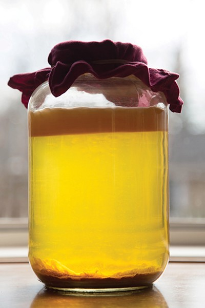Cider vinegar fermenting in a gallon jar; the thick layer of mother is clearly visible on top. - PETER BARRETT