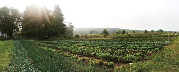 CSA garden at Glynwood in Cold Spring. - ERIK GOLDSTEIN