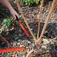 Pruning Shrubs, the Hard Way