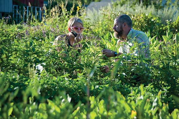 Dana and Michael Eudy harvesting Blue Vervain.