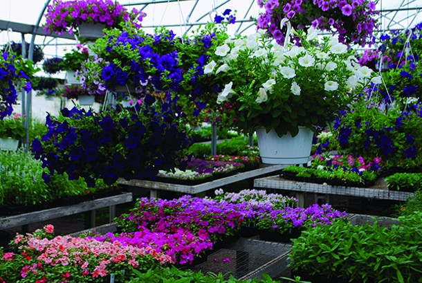 plant_shopping_michelle_23_2013_085.jpg