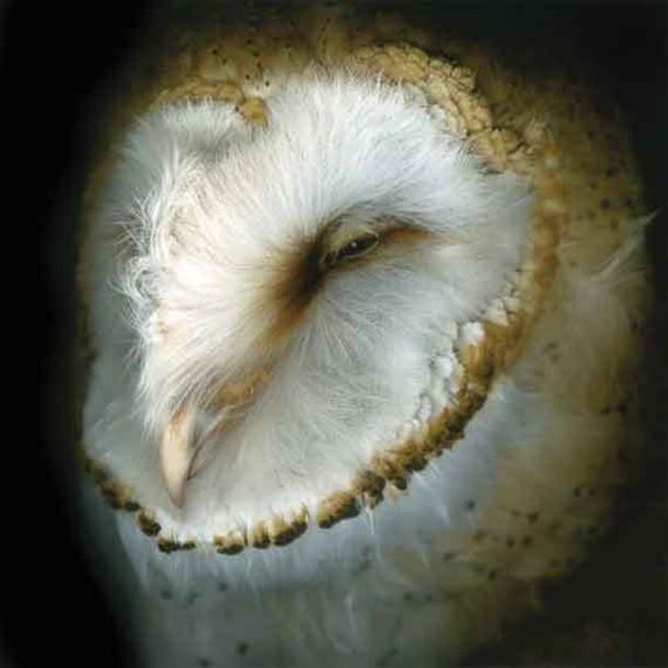 "Ellen Lynch, Dutch Owl, digitally captured subject, 23"" x 23"", 2010."