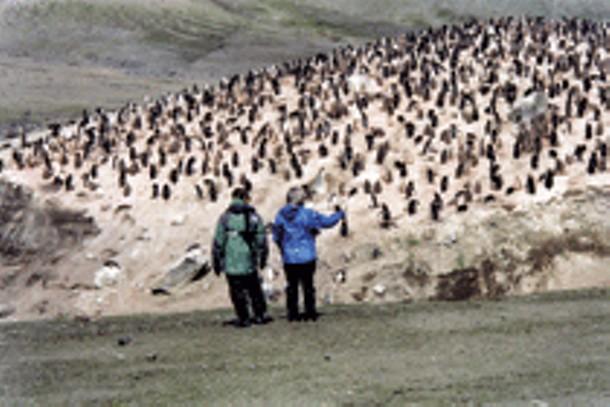 thousandsofpenguins8day.jpg