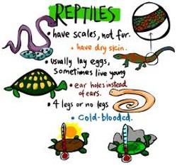 5925654e_reptiles.jpg