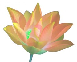 lotusorgange.jpg