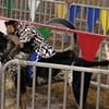 Hudson Valley Fair