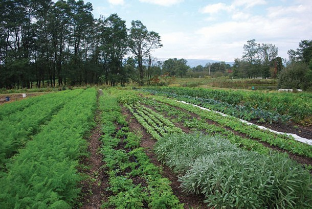 Jay and Polly Armour of Four Winds Farm in Gardiner grow vegetables in four acres of permanent no-till beds.
