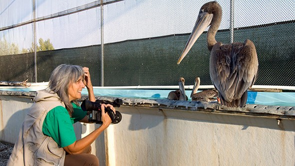 Judy Irving with Gigi, the rescued brown pelican from her documentary. - MARK BITTNER/PELICAN MEDIA, VIA SHADOW DISTRIBUTION