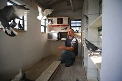 Kyle Warren with his birds in Levi Loft. - ROY GUMPEL