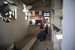 Kyle Warren with his birds in Levi Loft. - ROY GUMPEL