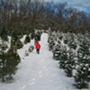 Battenfeld's Christmas Tree Farm: Cut Your Own Tree