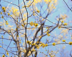 2706d94d_spice-bush-web-calendar.jpg