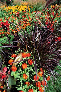 Mohonk's Koehn likes the contrast of red flowers and dark foliage. - LARRY DECKER