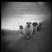 Art Excerpts Nicholas Walster, Ancestral Sheep, photo with ink, 4/08