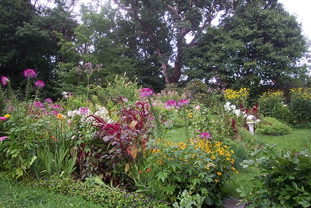 One of Jamie Fine's gardens, from the Secret Gardens Tour in 2010 in Saugerties, includes thalictrum, cleome, two varieties of rudbeckia, amaranthus cruentus, butterfly bush, candy lilies, zinnias, phlox, Joe Pye weed, torenia, and an antique