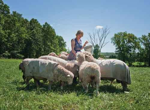 Paula Kucera, of White Barn Sheep and Wool, with her Cormo sheep outside her Gardiner home. - DEBORAH DEGRAFFENREID