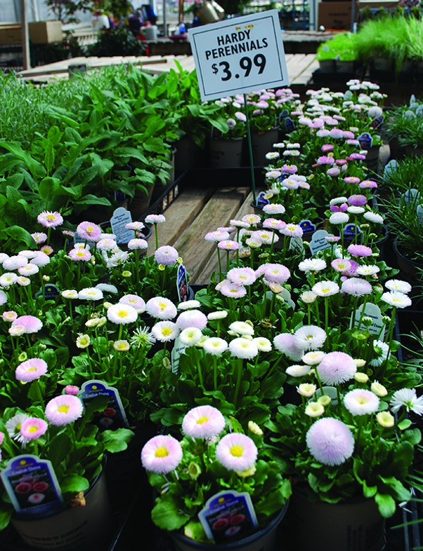 Pete Patel selects individual perennials that are compact at sale size. - LARRY DECKER
