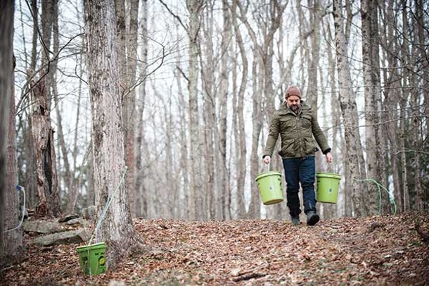Peter Barrett with buckets of sap collected from trees in Lake Hill, outside Woodstock. - JENNIFER MAY