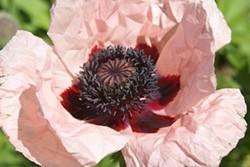 6b75e15d_web_flower.jpg