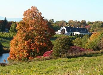 autumn-colorssm.jpg