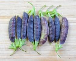 PHOTO CREDIT: MARGARET ROACH - Sugar Magnolia Purple Snap Pea Pods