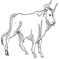 Taurus for June 2015