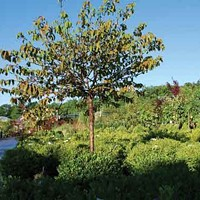Planting Trees and Shrubs in the Fall