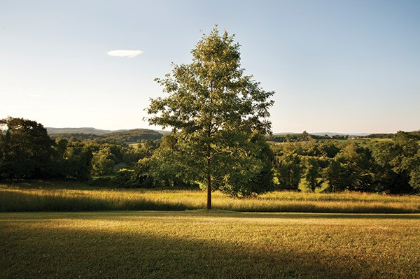 The tree Roth planted in memory of her mother stands across the field from her studio. - DEBORAH DEGRAFFENREID