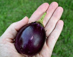 There are apparently no pictures of eggplant handwarmers on the Internet, so this is the best I could do.