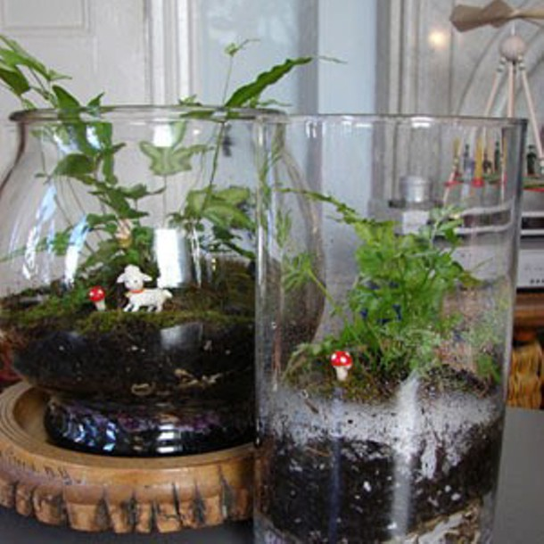 Tiny terrariums - AMY HUFNAGEL