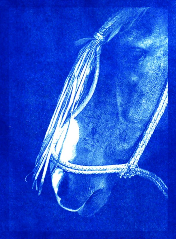 Profile, a hand-printed cyanotype by Lyne Raff, available from Equis Art Gallery in Red Hook