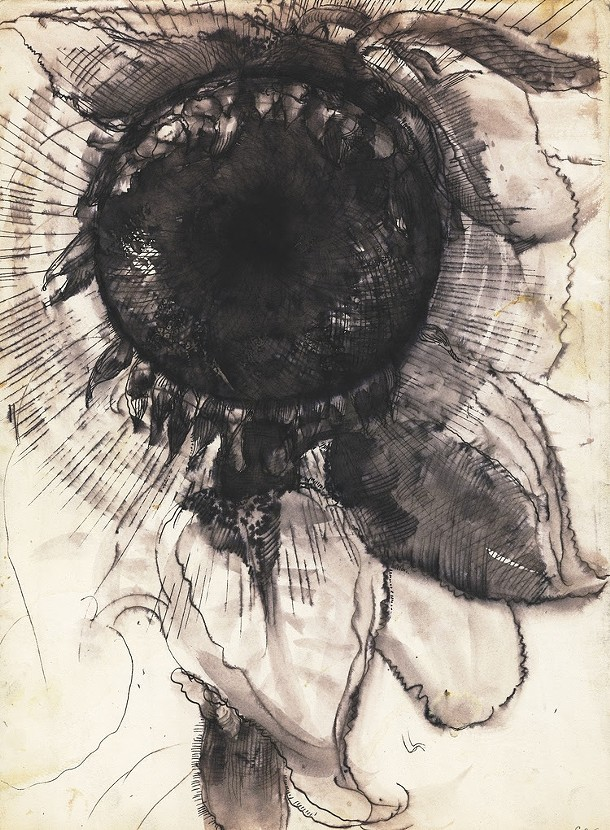 Jewel's Sunflower, Gregory Crane, india ink on paper, 1982 - GREGORY CRANE