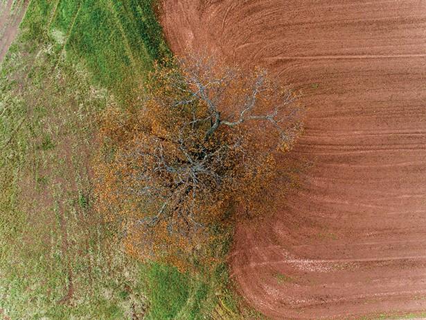 Story Farms 1, Alon Koppel, digital C-print