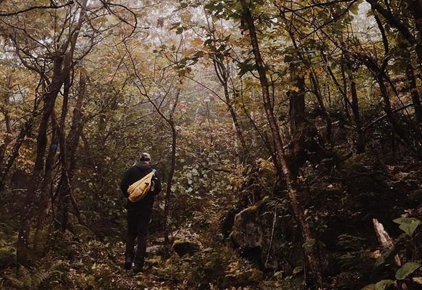 Panther Mountain - SIERRA FLACH