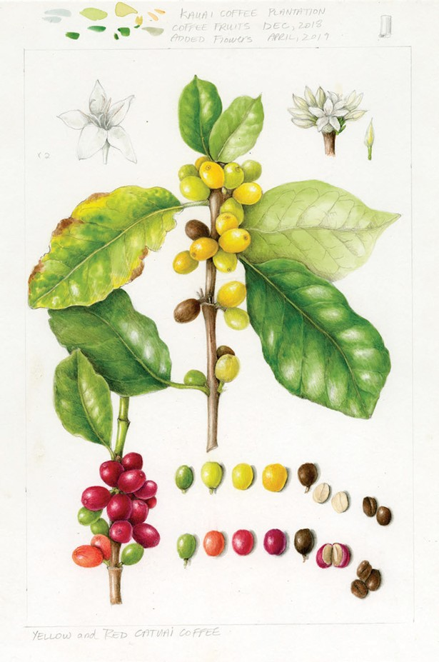 Illustration from Wendy Hollender's The Joy of Botanical Drawing.
