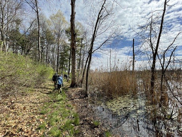 Vlei Marsh wetland trail