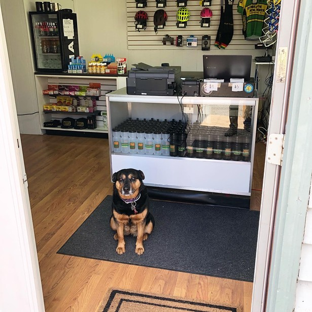 Lola, the shop pup, ready to greet visitors. - IMAGES COURTESY OF OVERLOOK BICYCLES