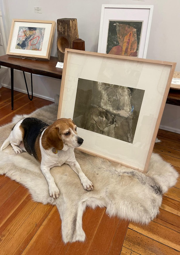 Vladimir the beagle adds to Pinkwater Gallery's homey ambience. - IMAGES COURTESY OF PINKWATER GALLERY