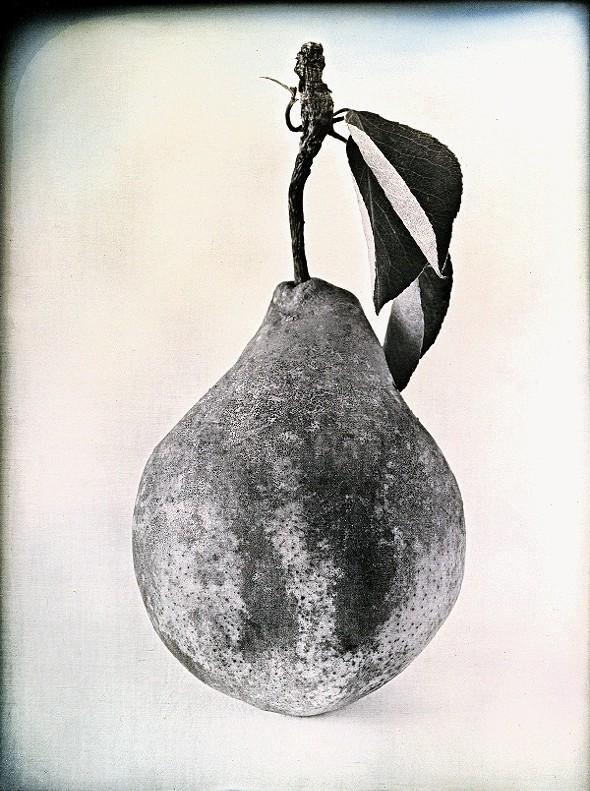 Tyson Pear - JERRY SPAGNOLI