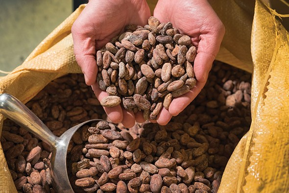 Raw cacao beans at Fruition Chocolate - ROY GUMPEL