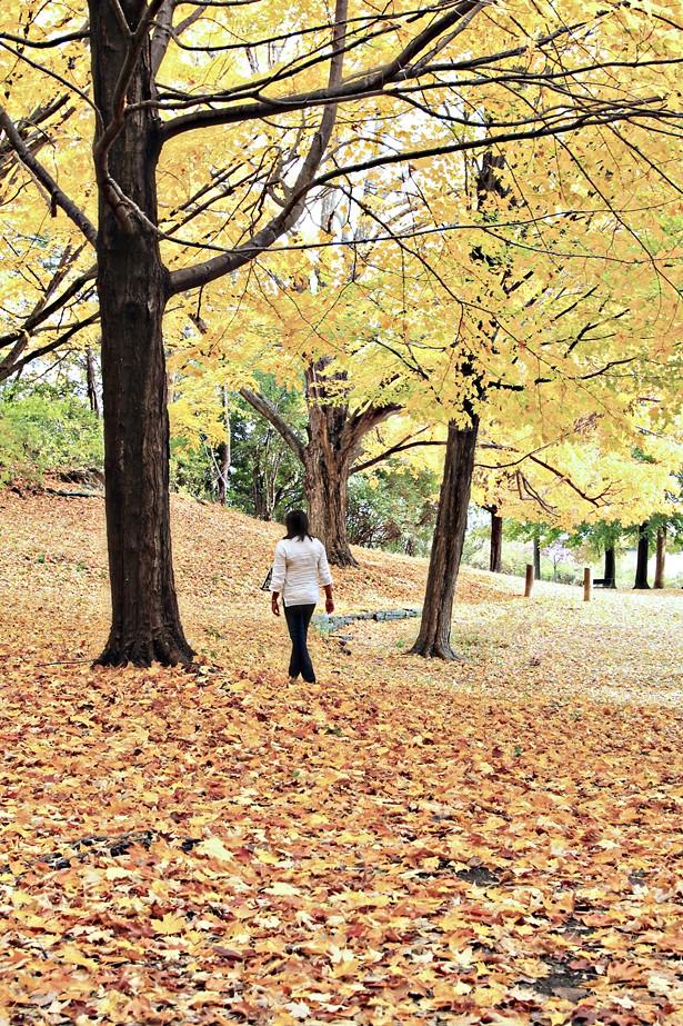 Vanderbilt Mansion grounds in Hyde Park - MARIANA XAVIER