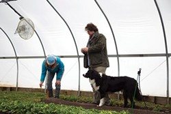 Pelaccio with Sue Decker of Blue Star Farm in Stuyvesant, whose greenhouses provide the restaurant with early spring vegetables. - PETER BARRETT