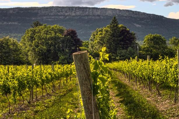 late_afternoon_vineyard_post.jpg