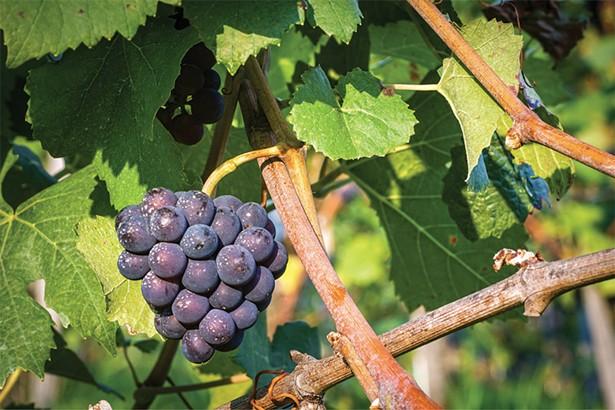 craft-beverage_benmarl_grapes.jpg