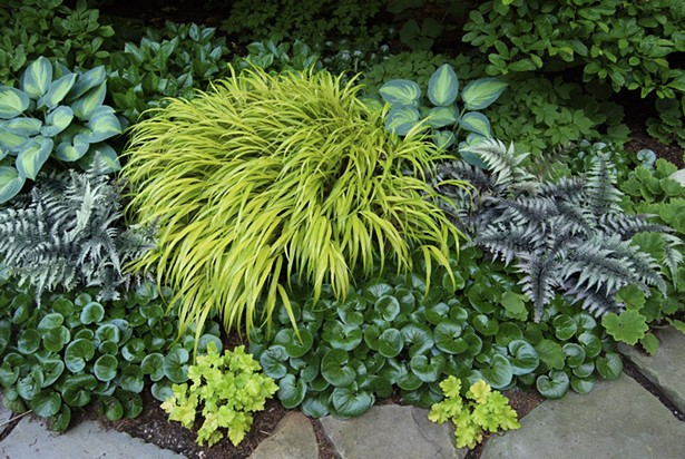 Even without flowers, mosaics of a few choice foliage plants like Hosta 'June', European ginger, Hakonechloa, and Japanese painted fern offer many months of enjoyment. - PHOTO BY MARGARET ROACH