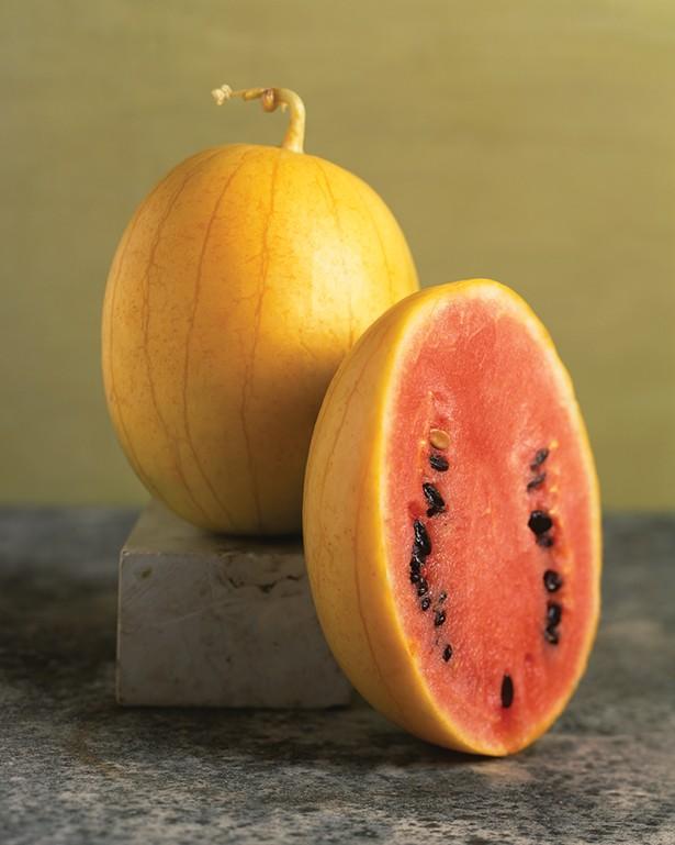 Golden Midget watermelon. - PHOTO: VICTOR SCHRAGER