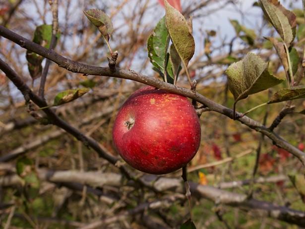 Stone Ridge Orchard