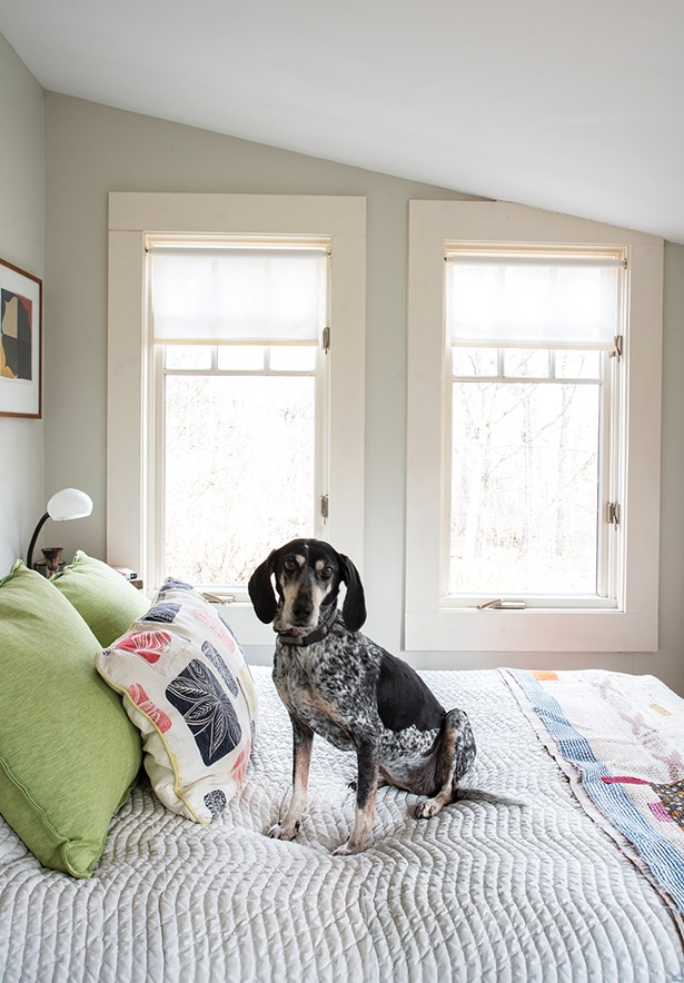 """Feinberg's dog Ceci, a Bluetick Coonhound, sits on her bed in the corner of what was once the covered porch. """"The house may be going through another renovation,"""" says Feinberg. - """"Even though it is far from a historic house, I feel it has a particular character that I enjoy being in conversation with. I'm waiting for it to tell me what to do."""" - PHOTO: DEBORAH DEGRAFFENREID"""